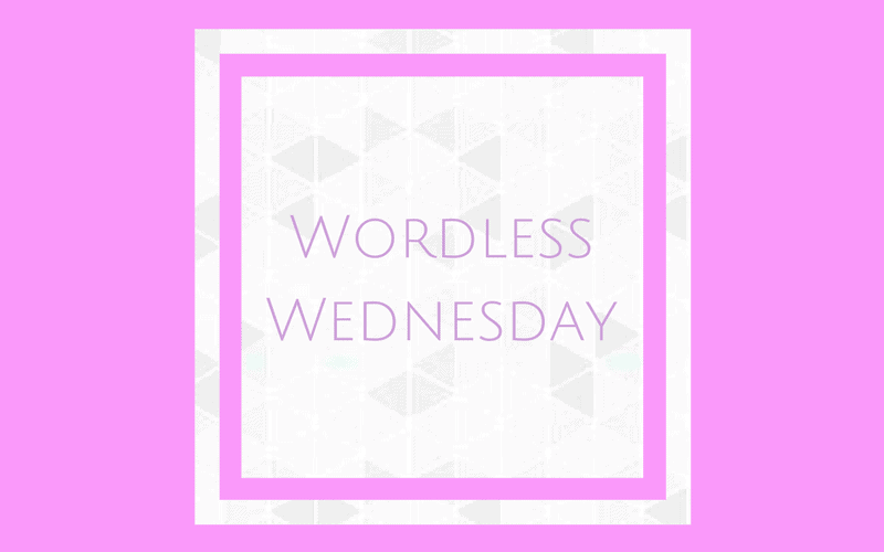 Wordless Wednesday – 5